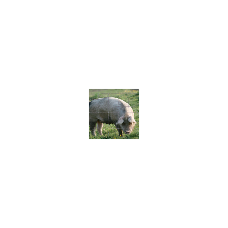 Grillage spécial gros gibier Ht 1,50 m