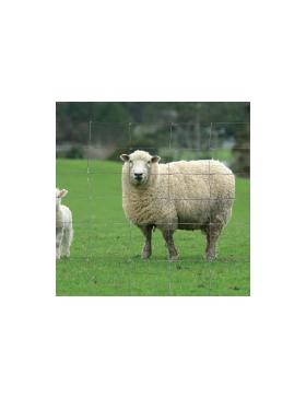 Grillage à moutons galvanisé Ht 1,22 m