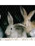 Grillage triple torsion (poules, lapins, oiseaux, déco..)